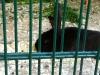 Selbst Hasen lauern hier hinter Gittern...